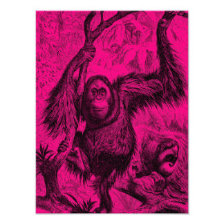 Vintage Orangutan Illustration - Hot Pink Monkey Photo Print