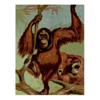 Vintage orangutans on a tree postcard