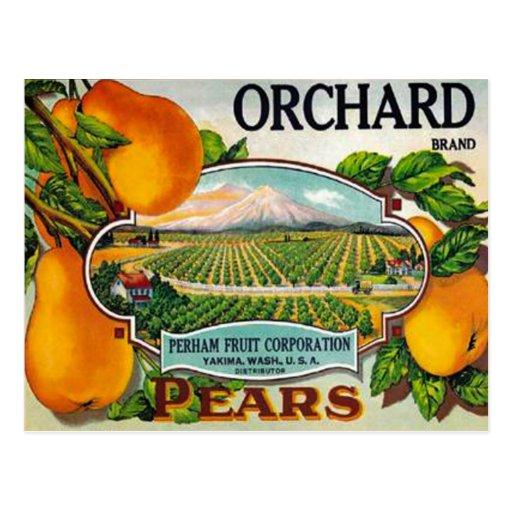 Vintage Orchard Pears Postcard