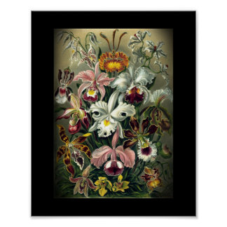 Vintage Orchid Botanical Print Posters