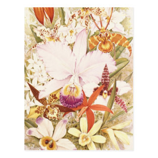 Vintage Orchid Flower Blooms Pretty Floral Design Postcard