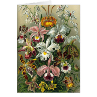 Vintage Orchids Greeting Card