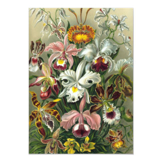 Vintage Orchids Flowers, Ernst Haeckel Invitations