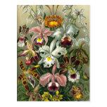 Vintage Orchids Postcard