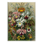 Vintage Orchids Posters