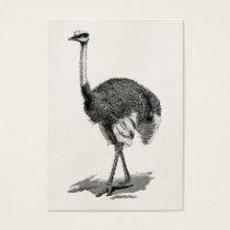 Vintage Ostrich Bird Antique Birds Template