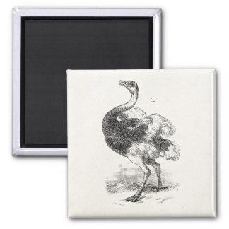 Vintage Ostrich Birds Personalized BirdsOstriches Fridge Magnets