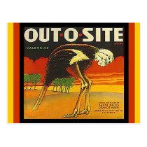 Vintage Out-o-site Ostrich citrus crate Postcards