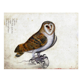 Vintage Owl Illustration Post Cards