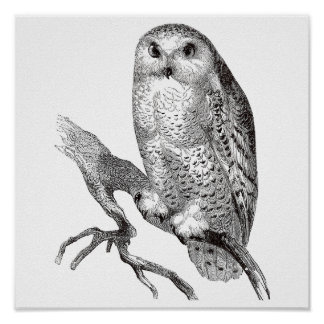 Vintage Owl Illustration - Print