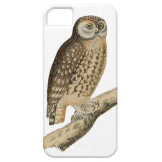 Vintage Owl perched on branch iphone case iPhone 5/5S Cases