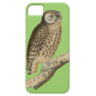 Vintage Owl perched on branch iphone case iPhone 5 Case