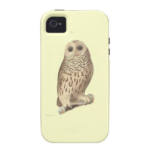 Vintage owl plate painting animal print iPhone 4 cover