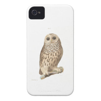 Vintage owl plate painting print iPhone 4 covers