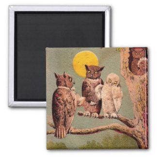Vintage Owls Magnet
