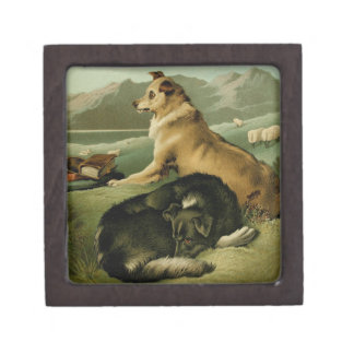 Vintage Painting: Collie Dogs Premium Jewelry Box