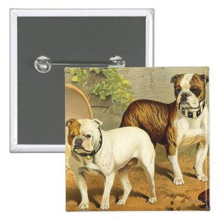 Vintage Painting of English Bulldogs Button