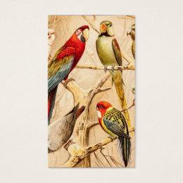 Vintage Parrot Cockatoo Conure Parakeet Cockatiel Business Card