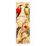 Vintage Parrot Cockatoo Conure Parakeet Cockatiel Business Card Template