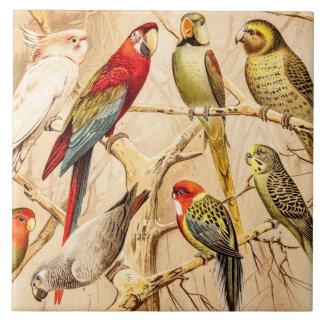 Vintage Parrot Cockatoo Conure Parakeet Cockatiel Ceramic Tile