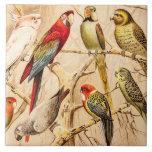 Vintage Parrot Cockatoo Conure Parakeet Cockatiel Large Square Tile