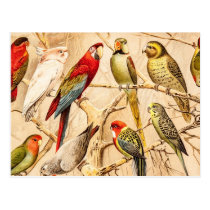 Vintage Parrot Cockatoo Conure Parakeet Cockatiel Postcard