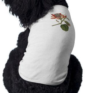Vintage Passion Flower Pet Shirt