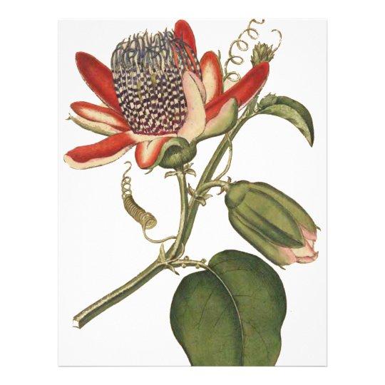 Vintage Passion Flower Flyer