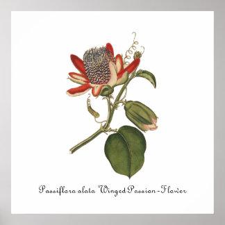 Vintage Passion Flower Illustration Poster