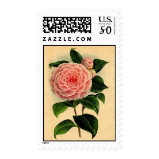 Vintage Peach Camellia Flower Postage Stamps