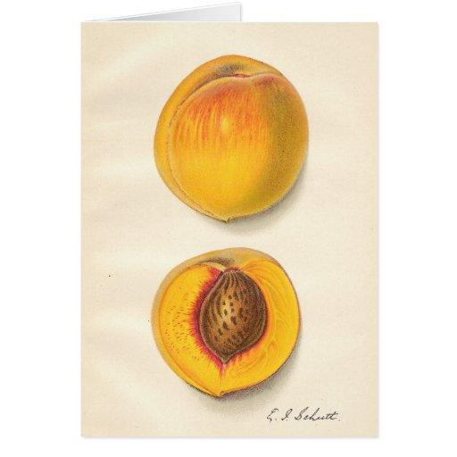 Vintage Peaches Card