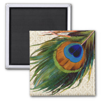 Vintage Peacock Feather 2 Inch Square Magnet