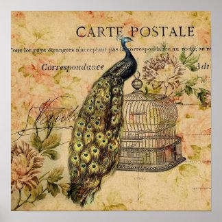 Vintage peacock floral botanical art poster