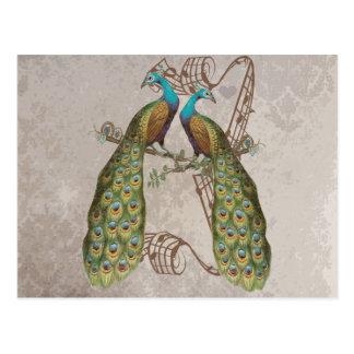 Vintage Peacock Grunge Damask Love Birds Postcard