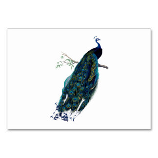 Vintage Peacock Illustration Table Cards