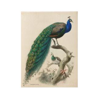 Vintage Peacock Illustration Wood Poster