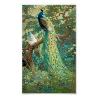 Vintage Peacock Image Poster at Zazzle