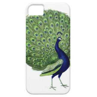 Vintage Peacock iPhone 5 Cases