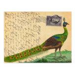 Vintage Peacock Letter with Stamp & Postmark Postcard