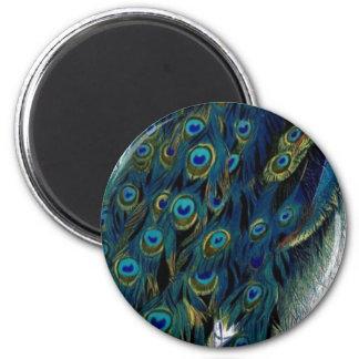 Vintage Peacock Magnet