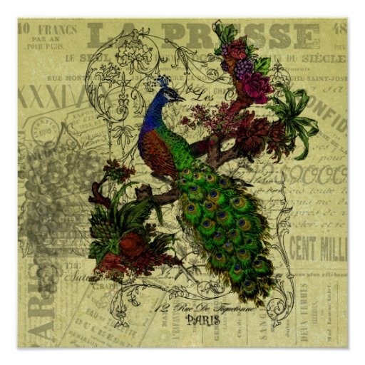 Vintage Peacock on Branch Apparel and Gifts Poster