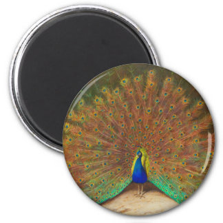 Vintage Peacock Painting 2 Inch Round Magnet