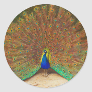Vintage Peacock Painting Classic Round Sticker
