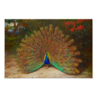 Vintage Peacock Painting Poster
