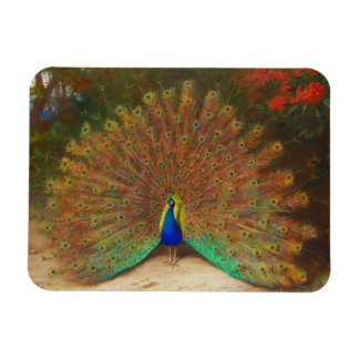 Vintage Peacock Painting Rectangular Magnets