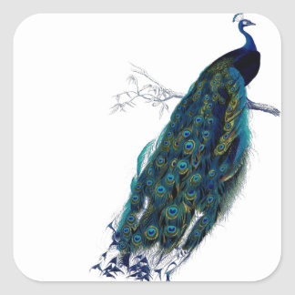 Vintage Peacock Square Sticker