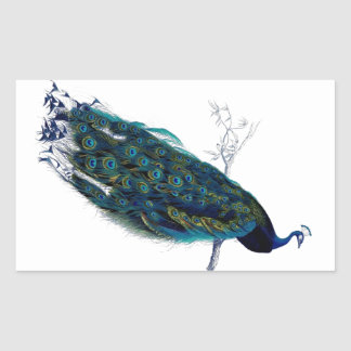 Vintage Peacock Rectangular Sticker