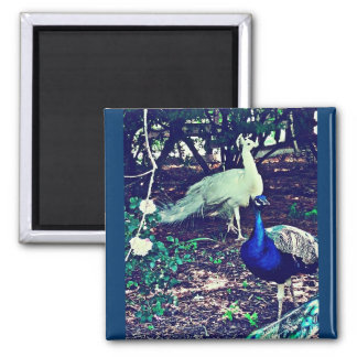Vintage Peacocks 2 Inch Square Magnet