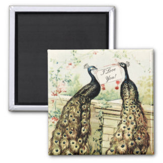 Vintage Peacocks Love 2 Inch Square Magnet