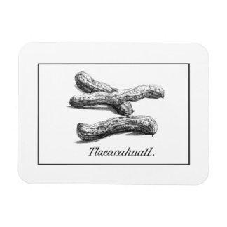 Vintage peanut etching magnet